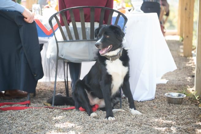 Churchview Farms Weddings Pittsburgh-0209