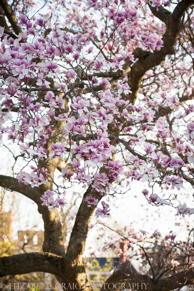 Pittsburgh Mellon Park Engagement Photos-14
